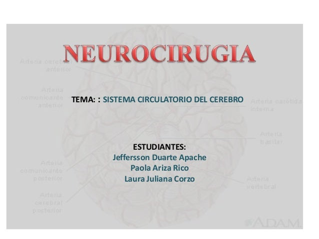 TEMA: : SISTEMA CIRCULATORIO DEL CEREBRO ESTUDIANTES: Jeffersson Duarte Apache Paola Ariza Rico Laura Juliana Corzo