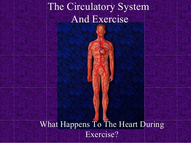 The Circulatory System       And ExerciseWhat Happens To The Heart During           Exercise?