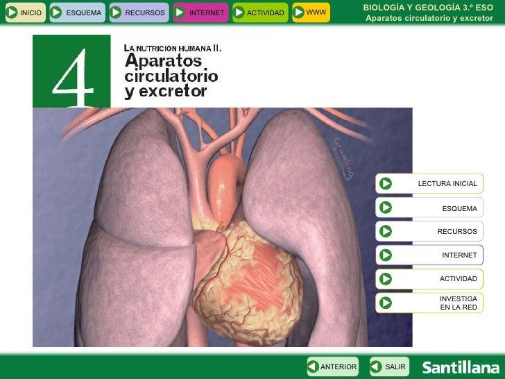 Circulatorio Excretor