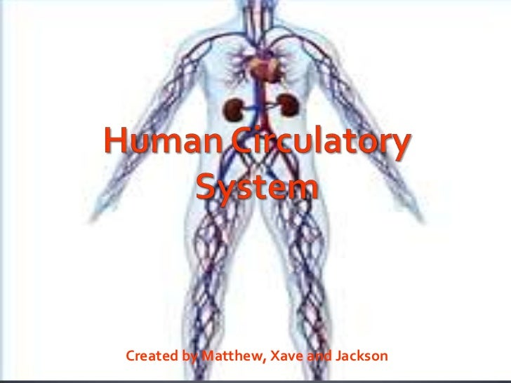 Human Circulatory System<br />Created by Matthew, Xave and Jackson   <br />