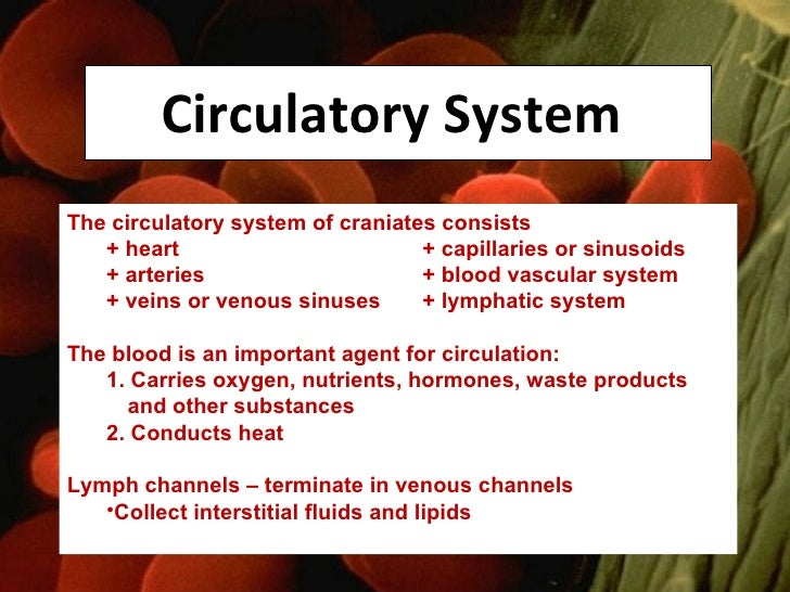 Circulatory System  <ul><li>The circulatory system of craniates consists  </li></ul><ul><li>+ heart + capillaries or sinus...
