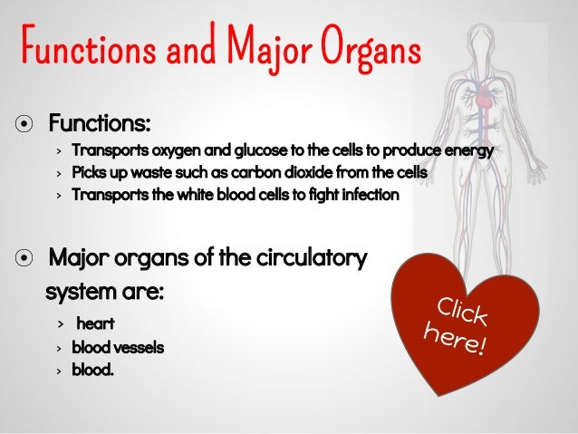 what are the major functions of the circulatory system