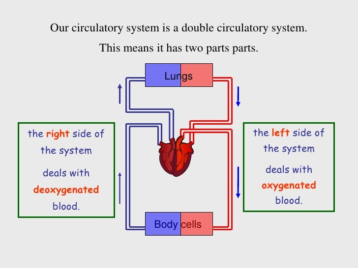 Circulatory System ( Circulation) - Lessons - Tes Teach