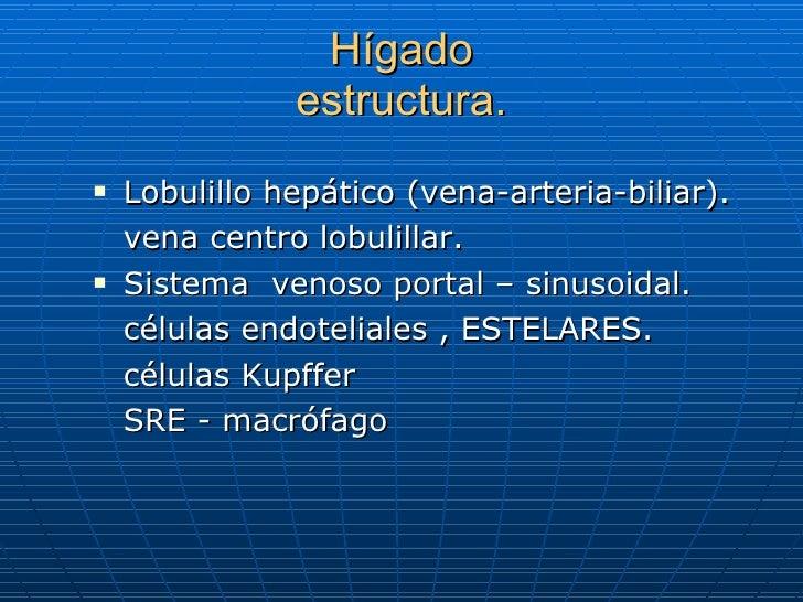 Hígado estructura. <ul><li>Lobulillo hepático (vena-arteria-biliar). </li></ul><ul><li>vena centro lobulillar. </li></ul><...