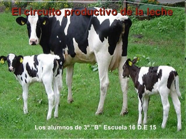 Circuito De La Leche : Cirucuito productivo leche b