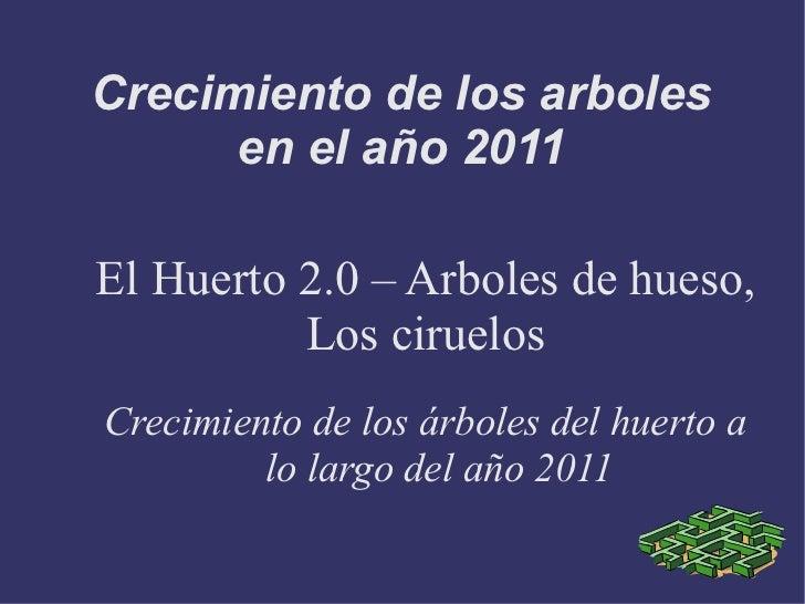 Crecimiento de los arboles      en el año 2011El Huerto 2.0 – Arboles de hueso,          Los ciruelosCrecimiento de los ár...