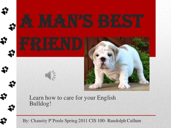 A Man's Best Friend<br />Learn how to care for your English Bulldog!<br />By: Chassity P'Poole Spring 2011 CIS 100- Randol...
