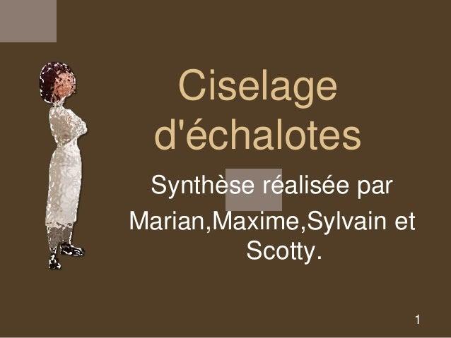 Ciselage  d'échalotes  Synthèse réalisée par  Marian,Maxime,Sylvain et  1  Scotty.