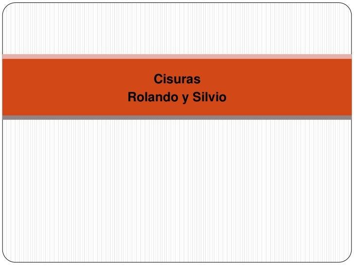 CisurasRolando y Silvio