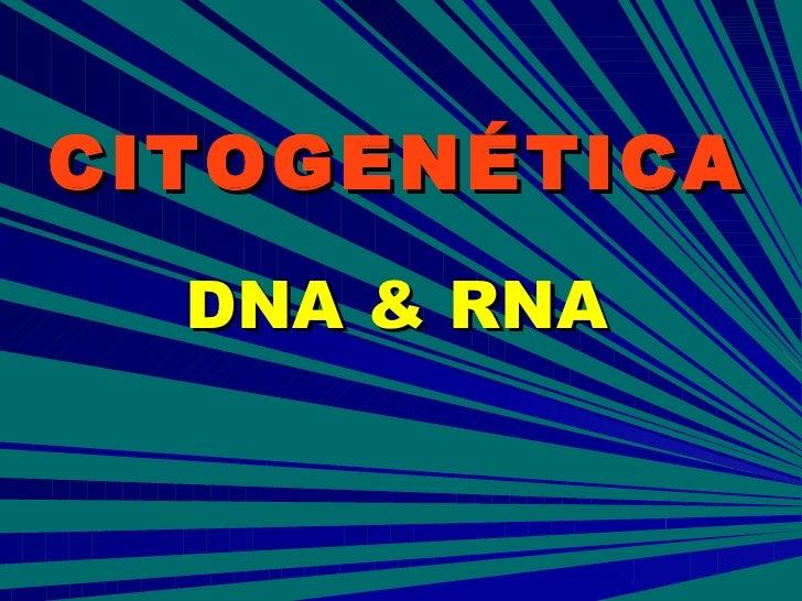 CITOGENÉTICA DNA & RNA