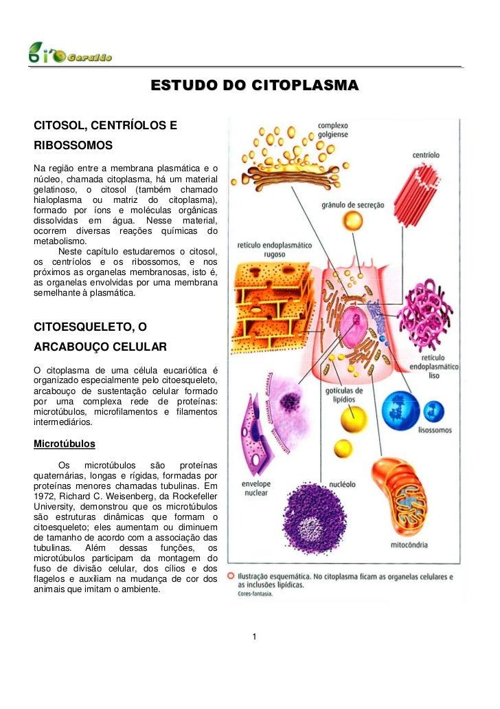 ESTUDO DO CITOPLASMACITOSOL, CENTRÍOLOS ERIBOSSOMOSNa região entre a membrana plasmática e onúcleo, chamada citoplasma, há...