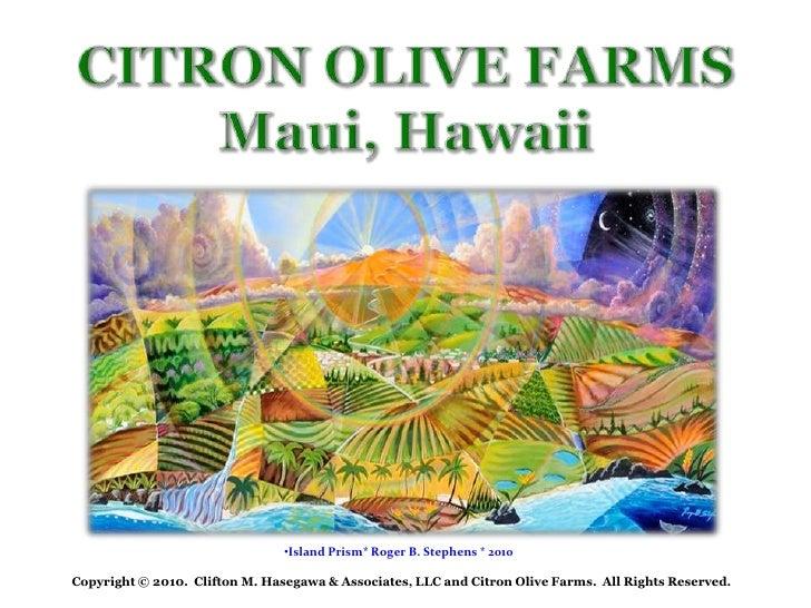 Citron Olive  Farms
