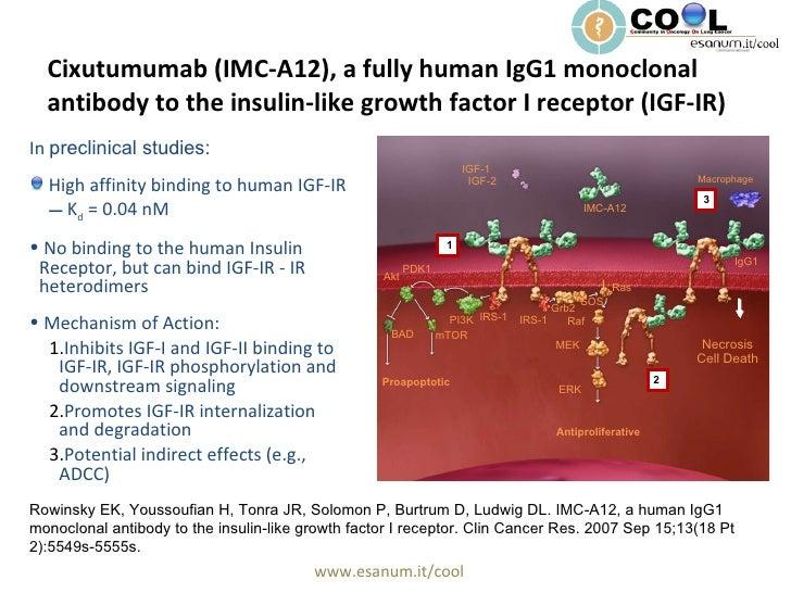 Cixutumumab (IMC-A12), a fully human IgG1 monoclonal antibody to the insulin-like growth factor I receptor (IGF-IR) <ul><l...