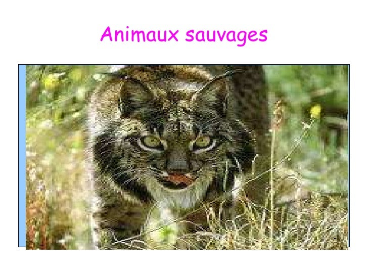 Animaux sauvages<br />