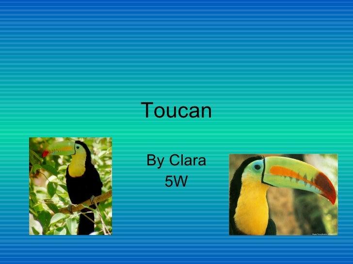 Clara s toucan