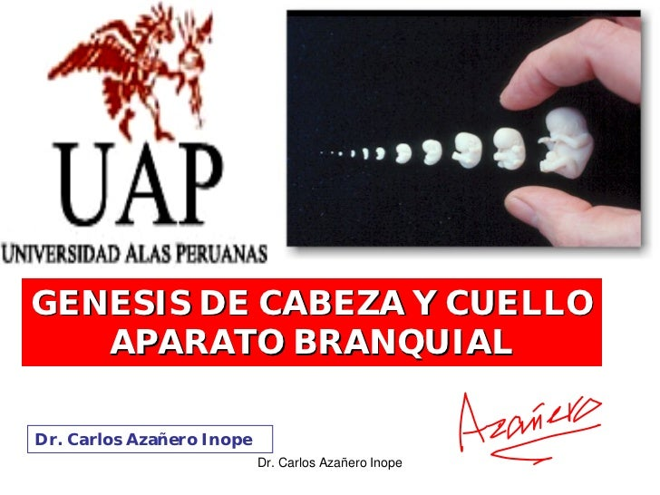 GENESIS DE CABEZA Y CUELLO    APARATO BRANQUIAL  Dr. Carlos Azañero Inope                            Dr. Carlos Azañero Inope