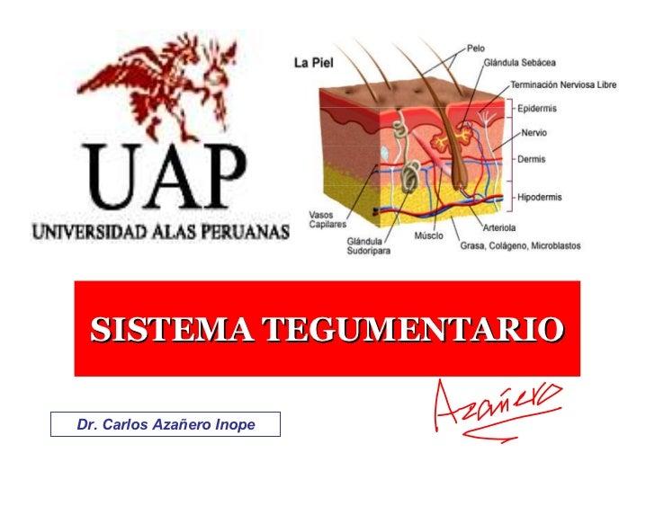 SISTEMA TEGUMENTARIO  Dr. Carlos Azañero Inope                            Dr. Carlos Azañero Inope