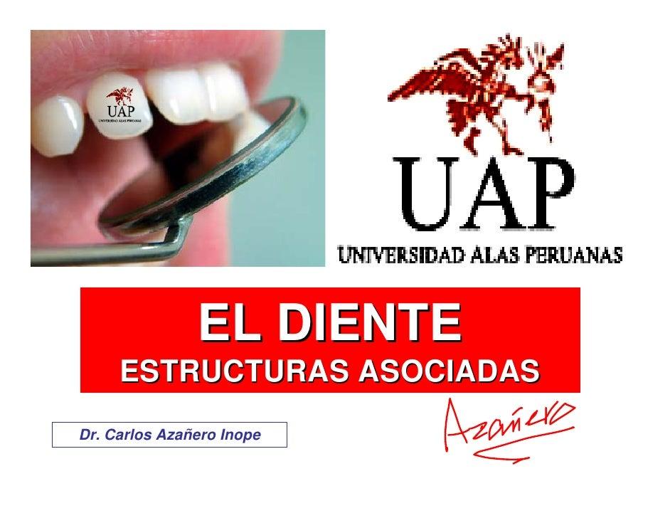 EL DIENTE      ESTRUCTURAS ASOCIADAS Dr. Carlos Azañero Inope