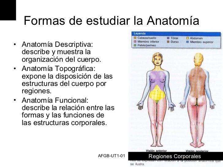 Contemporáneo Definir La Anatomía Regional Imagen - Anatomía de Las ...