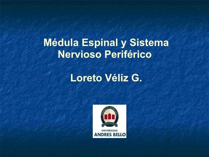 Médula Espinal y Sistema Nervioso Periférico  Loreto Véliz G.