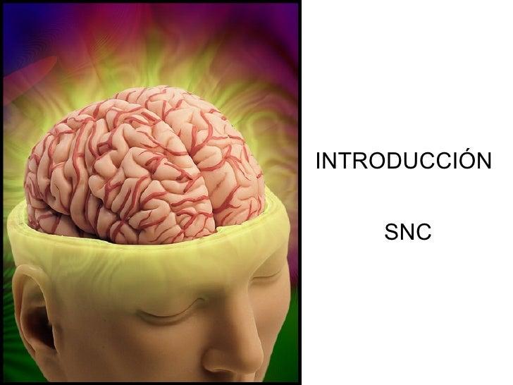 Clase 1- Introducción SNC