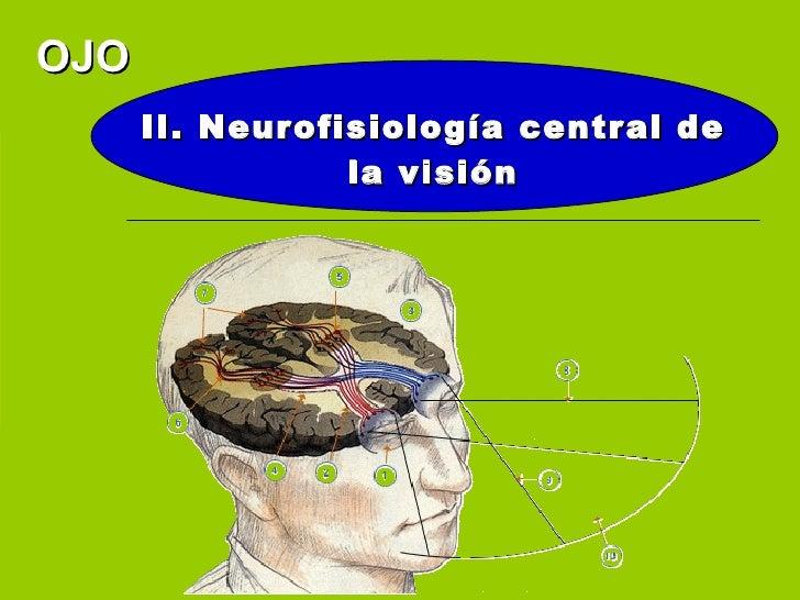 OJO       II. Neurofisiología central de                  la visión