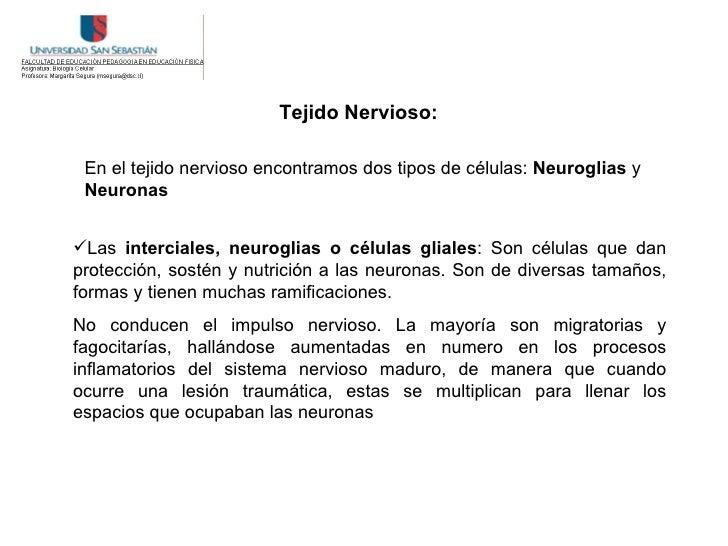 Tejido Nervioso:   En el tejido nervioso encontramos dos tipos de células: Neuroglias y  Neuronas   Las interciales, neur...