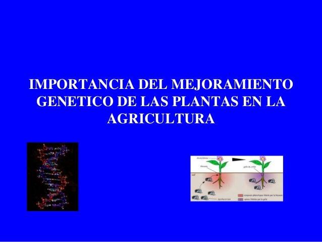 IMPORTANCIA DEL MEJORAMIENTO GENETICO DE LAS PLANTAS EN LA AGRICULTURA