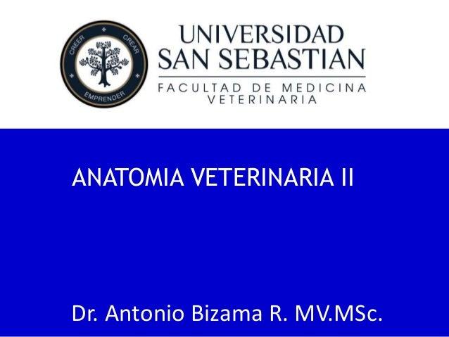 ANATOMIA VETERINARIA II  Dr. Antonio Bizama R. MV.MSc.