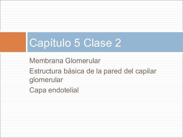Capítulo 5 Clase 2Membrana GlomerularEstructura básica de la pared del capilarglomerularCapa endotelial