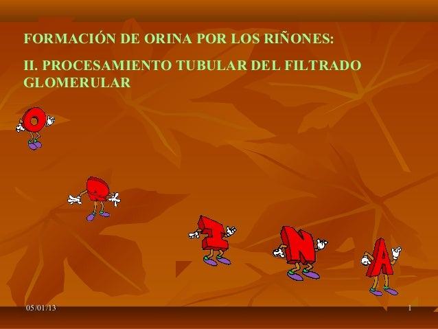 FORMACIÓN DE ORINA POR LOS RIÑONES:II. PROCESAMIENTO TUBULAR DEL FILTRADOGLOMERULAR05/01/13                               ...