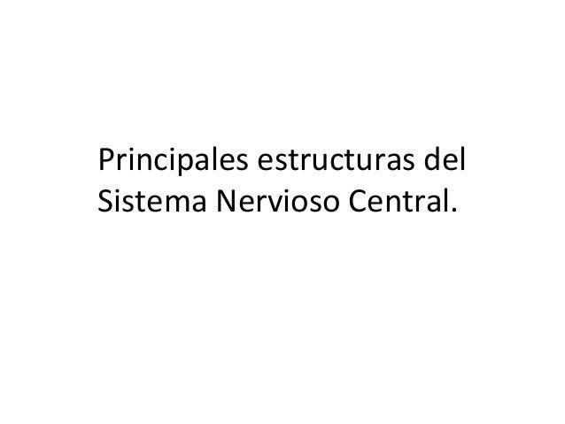 Principales estructuras del Sistema Nervioso Central.