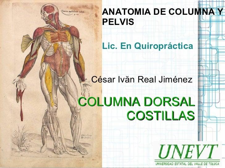 ANATOMIA DE COLUMNA Y   PELVIS   Lic. En Quiropráctica César Ivăn Real JiménezCOLUMNA DORSAL     COSTILLAS