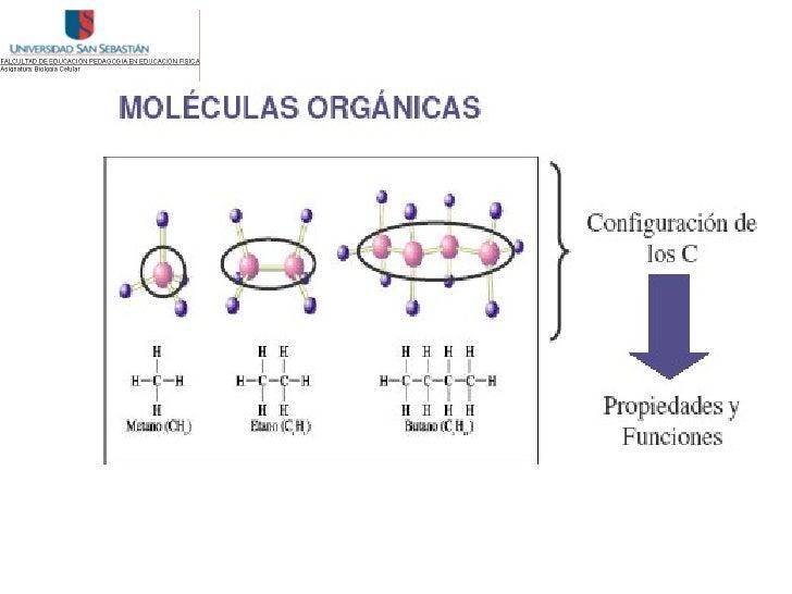 Los    glúcidos    son   biomoléculas   formadas básicamente por carbono (C),hidrógeno (H) y oxígeno (O). Los átomos de ca...