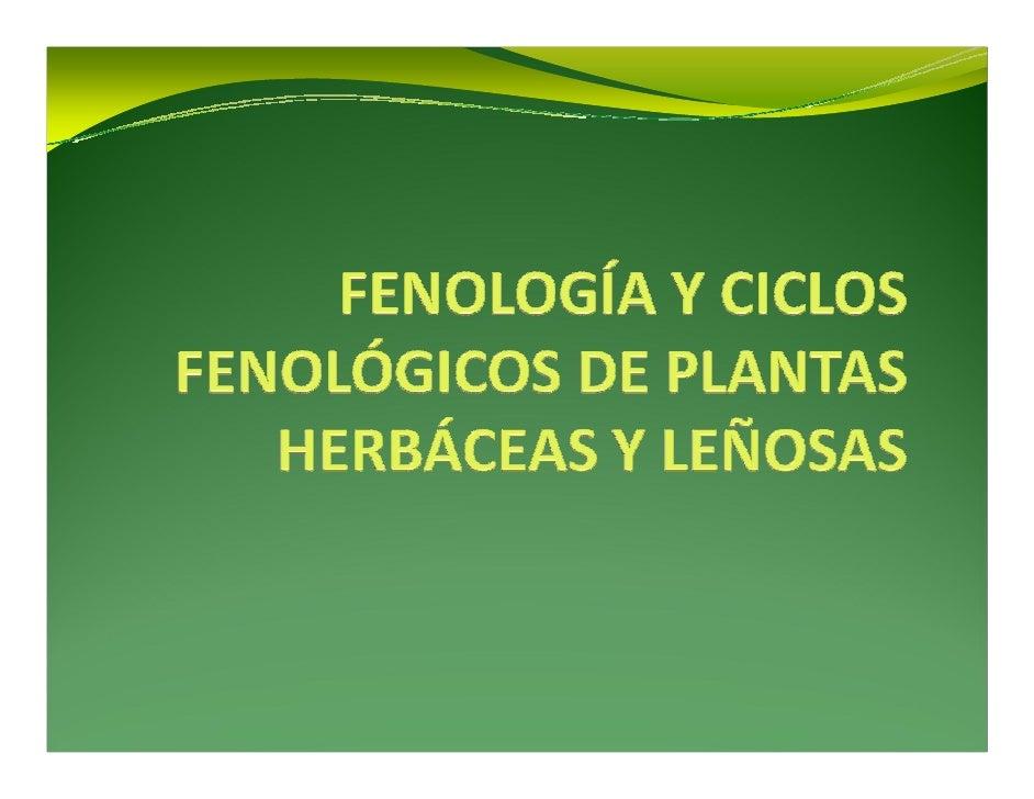 Clase 7  morfofisiología vegetal