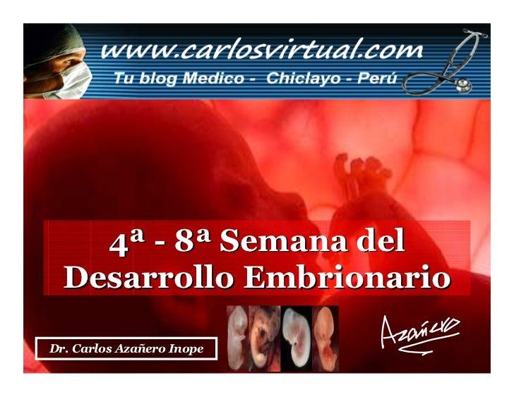4a - 8a Semana Embrionaria