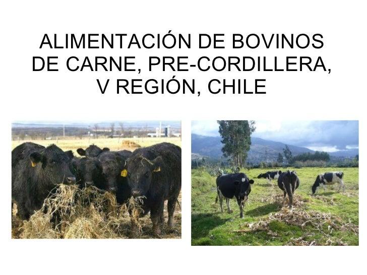 ALIMENTACIÓN DE BOVINOS DE CARNE, PRE-CORDILLERA, V REGIÓN, CHILE