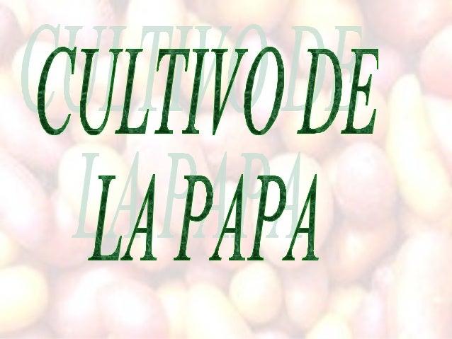 Importancia •Producción (%). El mayor productor de papa en el mundo es China con el 17% de la producción mundial seguido d...