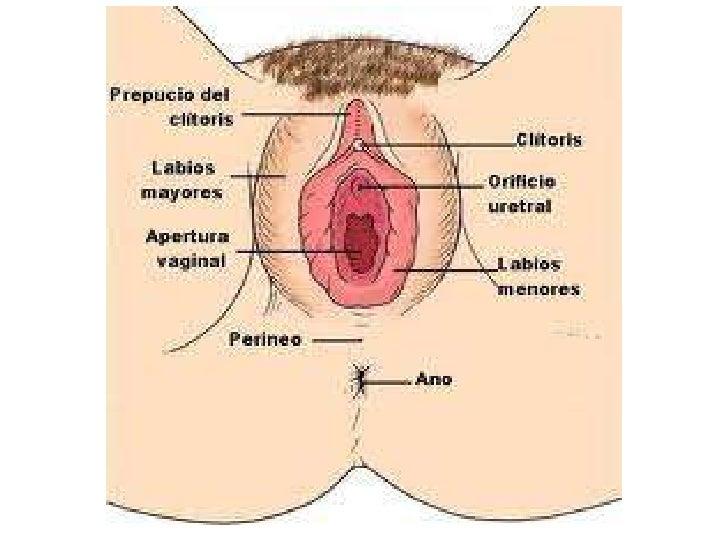 Si es posible privar la virginidad por el pequeño miembro