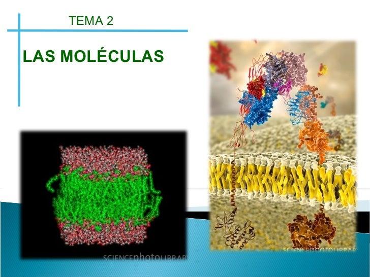 Clase macromoleculas