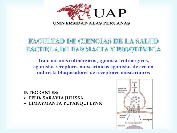 Clase nº 8  trasmision colinergica