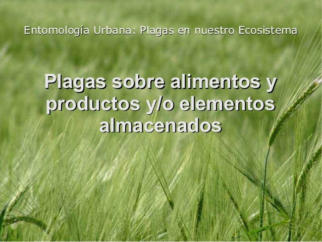 Clase plagas productos_almacenados