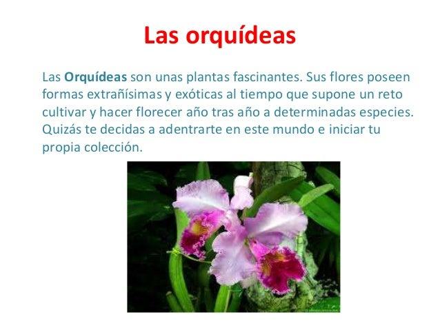 Clases de flores yuliana - Clase de flores y sus nombres ...