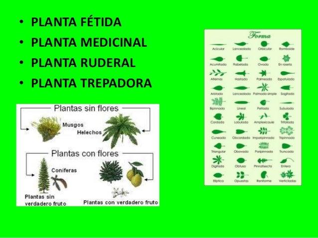 Plantas de interior plantas medicinales tipos de plantas - Clases de plantas de interior ...
