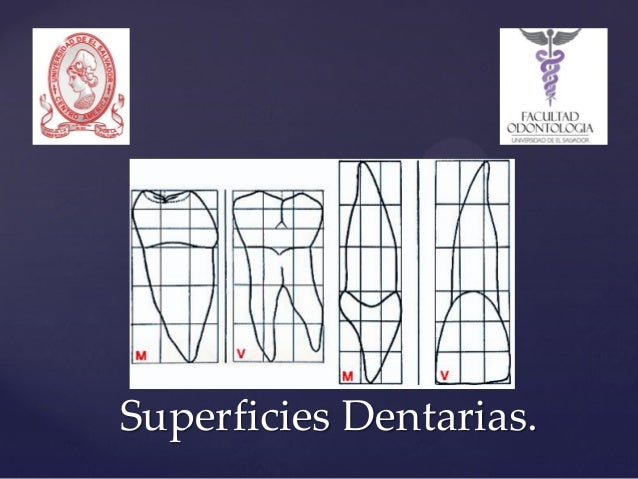 Superficies Dentarias.