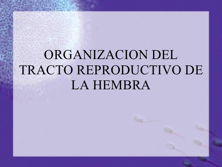 ORGANIZACION DEL TRACTO REPRODUCTIVO DE LA HEMBRA