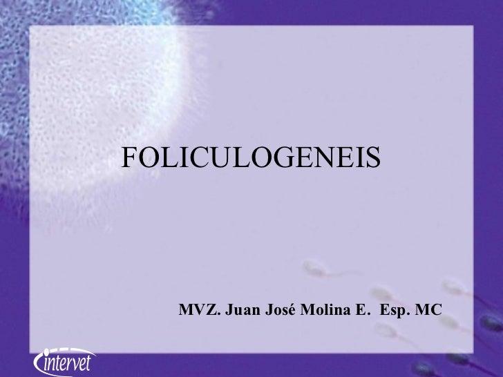FOLICULOGENEIS MVZ. Juan José Molina E.  Esp. MC