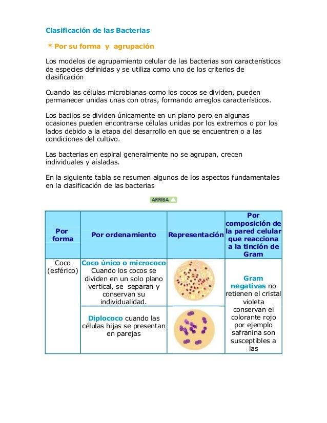 Clasificación de las Bacterias * Por su forma y agrupación Los modelos de agrupamiento celular de las bacterias son caract...