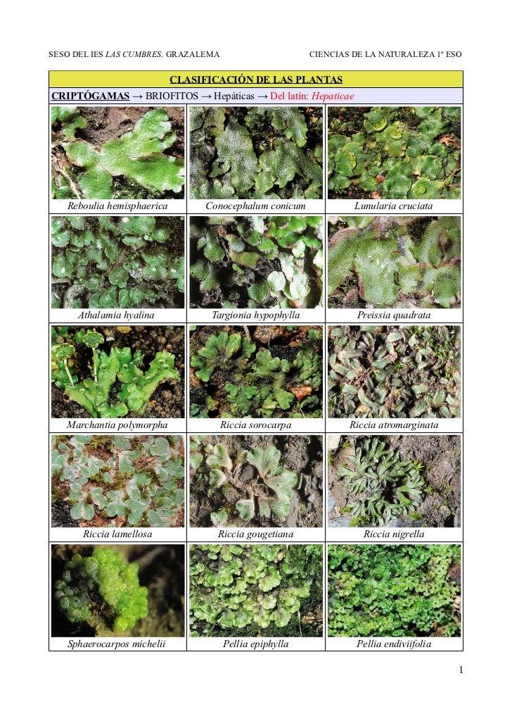 Clasificación de las plantas. Imágenes