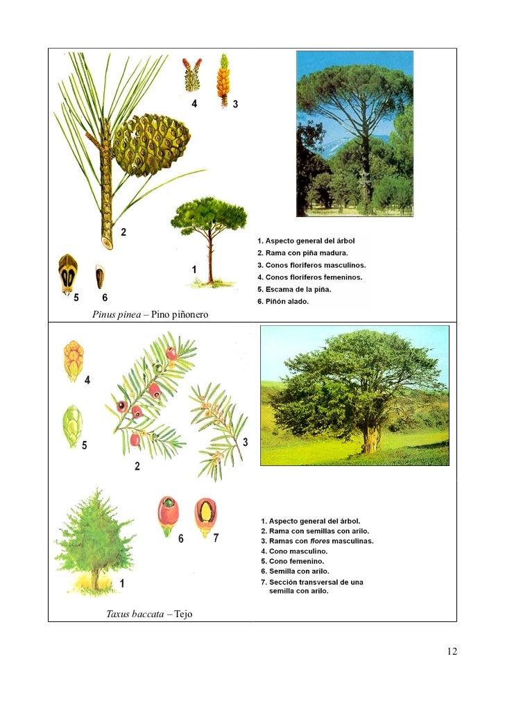 Clasificación de las plantas Imágenes